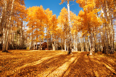 Fall Color of Last Year (circleyq) Tags: california morning autumn light color fall forest landscape golden cabin woods lakes sierra foliage mammoth aspen eastern