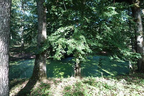 Chartrettes Bois St Denis (22)