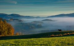 Weschnitztal im Morgenlicht - explore - (Rita Eberle-Wessner) Tags: landschaft landscape nebel fog berg hügel hills meadow weide wiese gras grass valley tal weschnitztal odenwald herbst kuh cow morning morgenlicht inversionswetterlage
