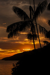 Sunset Palmtree (Rod.T28) Tags: canon1dsmarkiii canon1635mm28lii sunset angradosreis colors