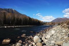 新疆禾木河  Hemu River, Xinjiang (C. Alice) Tags: river xinjiang autumn water 2013 sony sky clouds blue sonynex5r nex5r sonyepz1650mmf3556oss autofocus 1000views aatvl01 aatvl02