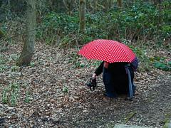Schneeglöckchen im Visier (ingrid eulenfan) Tags: leipzig markkleeberg agra fototour fotograf fotografieren frau regenschirm umbrella natur nature frühling schneeglöckchen spring sonyilcaalpha77ii sony77ii