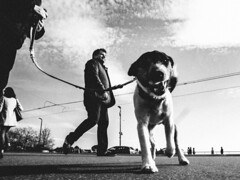 attack attack attack (matthias hämmerly) Tags: dog streetdog zürich zuerich street streetphotography candid monochrome grain contrast black white bw ricoh grd 2 winter hund see lake attack her