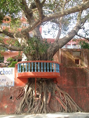 (Railroad Rat) Tags: rishikesh yoga capital meditation shanti india ganga river plain mother mata hindu hindi city shiva ganesh parvati rudraksh medicine om namah shivaya jai bum bolenath ancient bodhi tree
