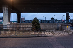 Alone and dying beneath Westway (Gary Kinsman) Tags: london w2 paddington westbournegreen westbournepark 2017 canon5dmkii canoneos5dmarkii canon28mmf18 urban urbanlandscape newtopographics topographics road highway motorway concrete architecture harrowroad westway a40 evening dusk clouds overcast dark blue elevatedhighway noone quiet mundane christmastree pinetree dead dyling lonely bleak grim lordhillsbridge