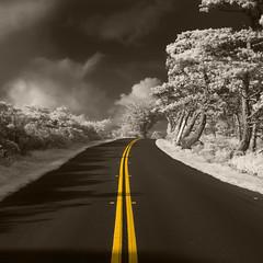 Vanishing Point (fksr) Tags: pointreyesnationalseashore landscape blackandwhite infrared piercepointroad road yellowline colorized marincounty california