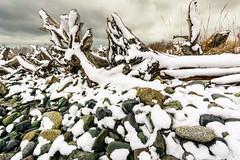Cold Beach (Tanya.Kirilova) Tags: snow rock pebble rocks driftwood beach sky winter cold outdoor white seashore stones beachtheme nikond7100 tokina1120mm ocean oceanfront pacificcoast pacificocean pacificnorthwest canada vancouverisland islandviewbeach britishcolumbia landscape winterlandscape snowlandscape