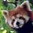 *Firefox
