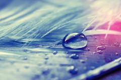 Little Diamond (.vermilion) Tags: macro water droplets drops waterdrop wasser tripod feather drop droplet remotecontrol waterdrops makro waterdroplets wassertropfen tropfen waterdroplet feder stativ trpfchen canonef100mmf28macrousm canoneos50d macroart fernauslser