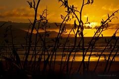 playing hide and seek with the sun (birdcloud1) Tags: ocean light sunset sea newzealand sky beach nature clouds coast kapiti kapitiisland flax kapiticoast harakeke waikanae canon50mm18 phormiumtenax 50mmlens 400d eos400d canoneos400d canon400d newzealandlandscapes amandakeogh amandakeoghphotography birdcloud1