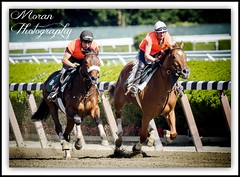 Tagg Trainees (EASY GOER) Tags: horses horse ny sports racetrack race canon track competition racing 7d athletes races sporting thoroughbred equine thoroughbreds belmontpark equines