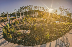 Riverstone Rise 2 (Crew One Photography) Tags: bridge reflection pentax fisheye 8mm manualfocus hdr sunflare k3 rokinon centralqld pentaxforumscom anologefexpro2