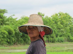 Rice planting woman (Lode Engelen - ) Tags: thailand rice mai chiang planting maetaeng