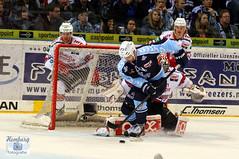 Hamburg Freezers - T. Oppenheimer (7) (Sport + Event- Bilder) Tags: ice hockey del nhl goal action tor jubel sieg hocky 2014 schuss freezers