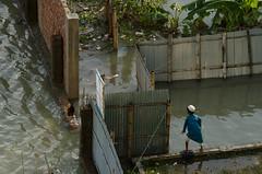 [Cox's Baazar, Bangladesh] (Piyaju) Tags: chicken water flood cox bazar bangaldesh