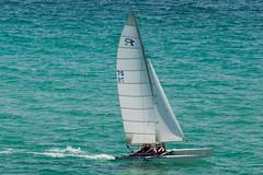 Catamaran (Anthony Leveritt) Tags: ocean gulfofmexico water sailboat florida catamaran sail panamacitybeach panamacity sigmaapo50500mmf463exdghsm anthonyleverittphotography