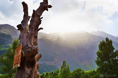 (muerdelaespina) Tags: light sun mountains tree luz sol landscape nikon huesca valle paisaje valley árbol trunk tronco montañas pirineo 3100 pineta muerdelaespina