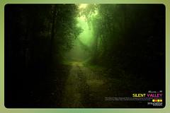 Silent Valley---------------01 (Binoy Marickal) Tags: tourism nature kerala mala palakkad evergreenforest silentvalleynationalpark nilgirihills mannarkkad mukkali kuzhur indiabinoymarickal