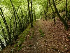 Uessbach old road (dix-tuin) Tags: road mhle die eifel vulkaneifel sbach strotzbscher