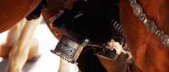 Detalles (Eduardo Amorim) Tags: horse southamerica argentina caballo cheval spur sperone pferde cavallo cavalo gauchos pferd pampa loro apero gaucho cavall staffa 馬 américadosul loros stirrup platería gaúcho estribo amériquedusud provinciadebuenosaires лошадь recado gaúchos 马 sudamérica sanantoniodeareco esporas suramérica américadelsur areco südamerika espora حصان pilchas pretal espuelas pilchasgauchas steigbügel recao pampaargentina americadelsud plateríacriolla breastcollar espuela americameridionale peiteira eduardoamorim estribera estrivo étrier pampaargentino