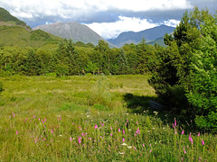 Scottish Meadow (tubblesnap) Tags: trees beautiful beauty scotland bush scenery purple north meadow ballachulish