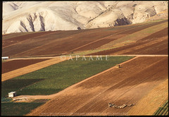Agricultural fields in the Jordan Valley (APAAME) Tags: archaeology ancienthistory middleeast airphoto oblique aerialphotography aerialphotograph scannedfromslide aerialarchaeology