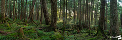 A b a n d o n A l l H o p e H e W h o E n t e r s H e r e (AnthonyGinmanPhotography) Tags: panorama green forest moss olympus panoramic nagano rayoflight naganoprefecture novoflex shirakomaike olympus1454mmf28 leefilters olympuse30