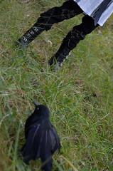 Hunter and Raven King (Suliveyn) Tags: doll bjd soom raven tale kenzo ender nayuta dollmore