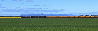 EL53 S300 and S311 pass their way through Spring crops at Dooen
