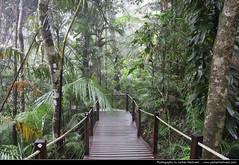 Barron Gorge National Park, Queensland, Australia (JH_1982) Tags: world park trees tree heritage nature wet forest landscape rainforest australia national jungle area qld queensland tropical trunk gorge np australien tropics barron australie