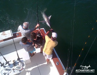 shark fishing charters Amelia Island, FL