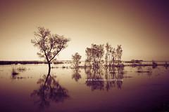 At sunset (Flavia Morlachetti Photography) Tags: trees sunset naturaleza tree nature water argentina river landscape atardecer rboles natural dusk paisaje victoria rosario rbol travelphotography fotografadeviajes flaviamorlachetti