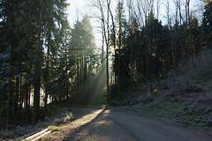 Sunlight (Aah-Yeah) Tags: sunlight sonnenstrahlen strehtrumpf grassau achental chiemgau bayern nebel fog wald forest