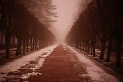 Listen!!! (Sergei P. Zubkov) Tags: fog peterhof march alley snow