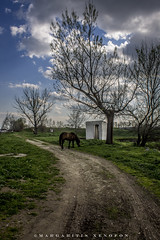 Horse (PhotoXen) Tags: green hourse larisa road sky clouds trees