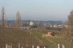 Vineyard winter works around St Meard (Cinedavinci) Tags: gironde dordogne sudouest aquitaine paysages landscapes hills nature animals plants green naturals plantations vineyard bordeaux saint emilion medoc vin winery trees woods country campagne bucolique bucolica campagna natura sky territory territorio geografia terra earth birds rural rurality rurale contadino paysan cities small town