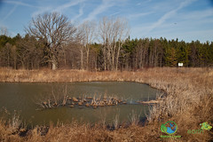 2014-April-McKellar-Tract-Lambton-County-Spring-Ontario-4607