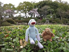 monkeys in osaka castle park (squeezemonkey) Tags: park trees japan toys pond hedge monkeys osaka stonelantern osakacastle squeezemonkey mrcisco