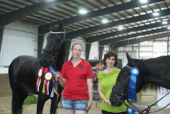 DSC01540 (jmbedel) Tags: ohio horses horse mare springfield horseshow andalusian 2014 friesian gelding cessnastables buckeyebaroque