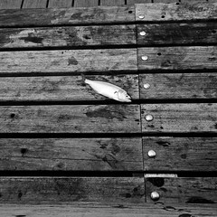 Fish on a Bench (slightheadache) Tags: newyorkcity fish newyork coneyisland pier coney