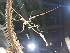 Melbourne Museum - Dinosaur Walk