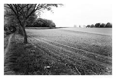 the tree005 (marsmail2012) Tags: bw netherlands blackwhite zwartwit nederland zw zuidlimburg marceljansen marsmail2012