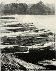 Anglų lietuvių žodynas. Žodis sea raven reiškia jūros varnas lietuviškai.