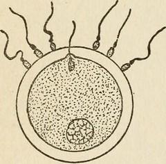 Anglų lietuvių žodynas. Žodis ectopic gestation reiškia negimdinio nėštumo lietuviškai.