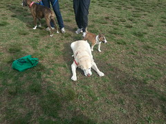 Dog Park (missjessicab) Tags: park dogs java pickles maxxie