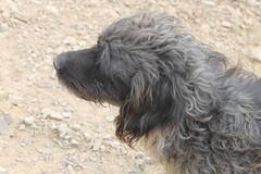 sucio (Lovelace Camilo) Tags: perros