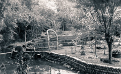 Stio do Mario (Paulo Bretas) Tags: lake tree film nature water 35mm 50mm nikon kodak iso400 natureza 400 asa f18 18 fm2