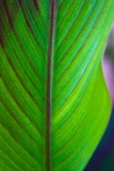 Life (Engineer J) Tags: green closeup leaf outdoor july testing 28 veins rib 1855 tamron mid canna freshness 2014 indica img1776