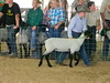 """Sheep 2014 • <a style=""""font-size:0.8em;"""" href=""""http://www.flickr.com/photos/78989085@N02/14692718158/"""" target=""""_blank"""">View on Flickr</a>"""