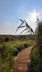 Early Morning Hike (BoneFishPhotography) Tags: summer ny newyork nature canon outdoors photography earlymorning upstate hike dew wetlands boardwalk appalachian goodmorning appalachiantrail sunflare marshlands neverstopexploring